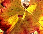 8x10 Fine Art Print, French vineyard photography, Autumn fine art photography, Fal leaves, nature photography, Provence, France, wine