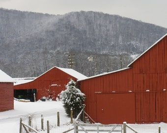 Red barns in beautiful snow 2