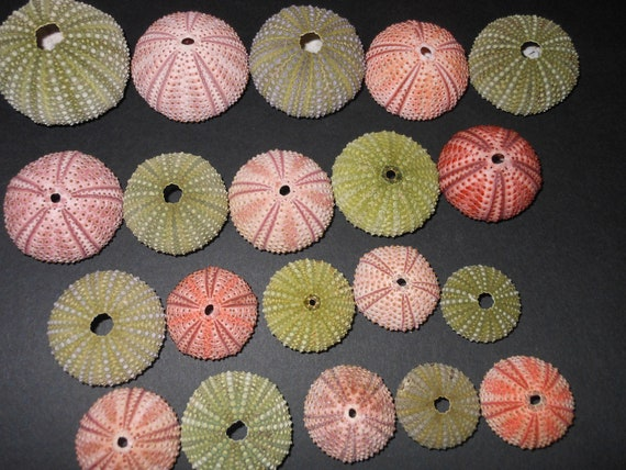 10pcs green, 10pcs red sea urchins, free shipping.  15.