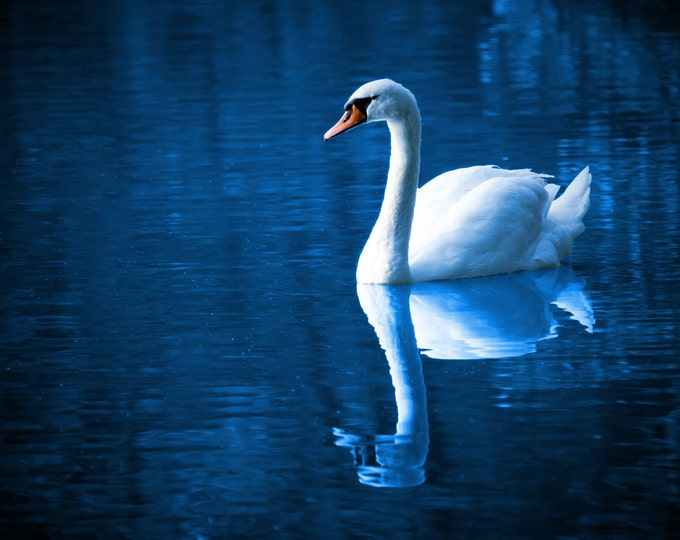 Swan  and refection on deep blue lake -Cross Stitch Pattern -  Vintage Photograph  - Fine Art Photography