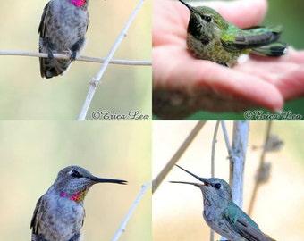 Bird Photography Gift Set 4 Hummingbird Photos Nature Art Rustic Home Decor Prints for Bird Lovers