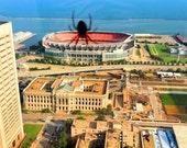 Godzilla Spider Eating Browns Stadium Series JPG Files or Matted Fine Art Prints BOGO Free