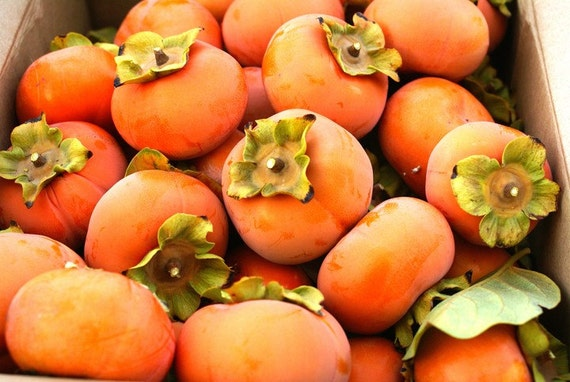 Award Winning Indiana Persimmon Pudding Recipe