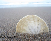 Beach Photography, Sand Dollar by Shore, San Francisco Photography, Minimalist, 8x10, Ocean, Coastal, Wall Art