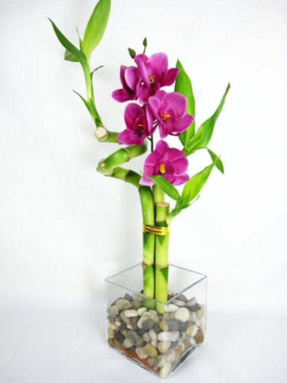 Vivre Sprail 3 Style Bambou Chanceux W Vase Verre