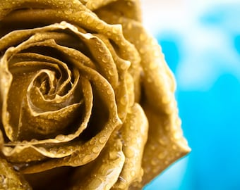 Golden Rose photo Digital Download Photography gold and blue wall art