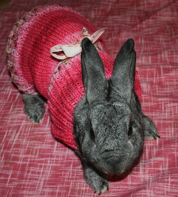 Reserve for Roger10 - bunny rabbit hand knit sweater pants or top for self chew or post op bunnies medium pink