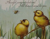 Vintage 1919 Birthday Postcard With Cute Birds And Honey Bee