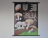 SALE Authentic Mid Century Chart. White mushroom (Psalliota campestris). Pull Down School Chart. Jung Koch Quentell. Pull down chart map
