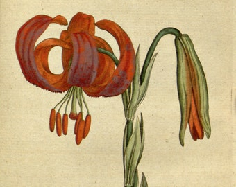 Botanic illustration, Wall art botanical, Nature botanical, 30