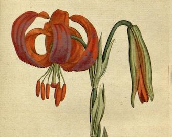 Botanic illustration, Wall art botanical, Nature botanical, 30
