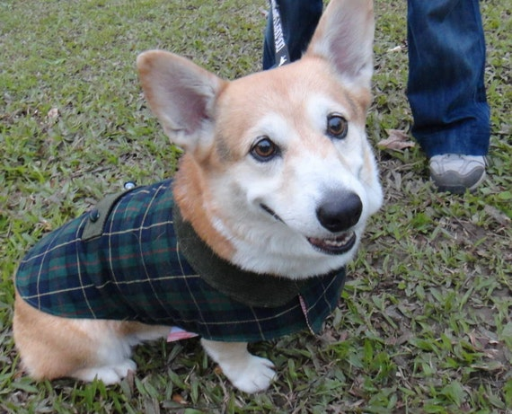 Corgi winter coat check tartan wool blend with fleece lining or for medium dog breed of similar size (size: LB-ML-CG)