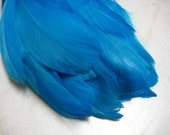 """Turqoise Goose Nagoire Feathers, 10 Loose Feathers / 6""""-8"""""""