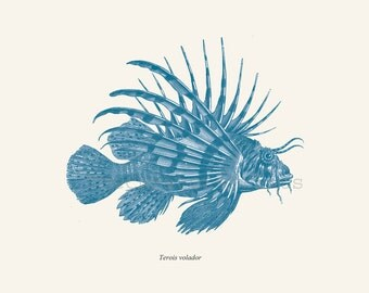 Antique Lionfish Print Pterois 1874 Restored Image Natural History