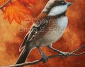 "Songbird ORIGINAL oil painting - NOT a print - ""Autumn Chickadee"""