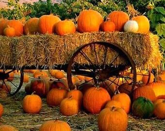 Pumpkins on Wagon