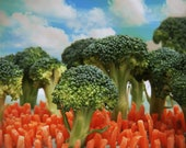 Broccoli City-8 x 10 Kitchen Food Landscape Photograph