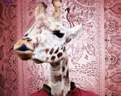 Giraffe Photography Print - Bollywood pink