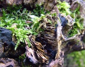Mossy Log in Woodland Photo Card