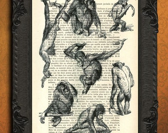 Monkeys art print monkey illustration antique book page monkey study page poster