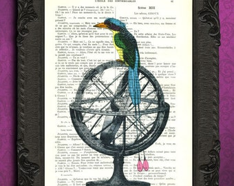 Print bird of paradise illustration tropical bird and armillary sphere