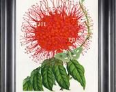 BOTANICAL PRINT HOUTTE 8x10 Botanical Art Print 23 Beautiful Red Jonesia Asoca Flower Green Butterfly Home Wall Decoration to Frame