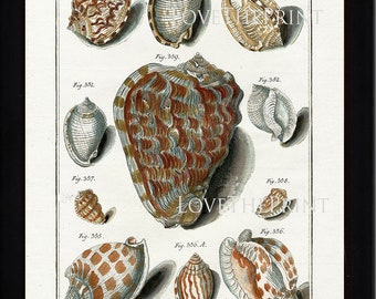 SHELL PRINT MARTINI  Art Print 2 Beautiful Antique Cassicles Shells Sea Ocean Nature to Frame Home Decoration Seashell