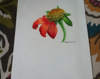 Original Colored Pencil drawing of Orange Mexican sunflower