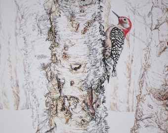 Woodpecker in woods on a birch tree limited edition giclee print by TimberlandDrawings