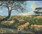 "After the Rain 9"" x 4.5"" Lion Pride on African Plain Print"