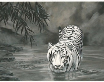 Torrit the Tiger, White Tiger in Water