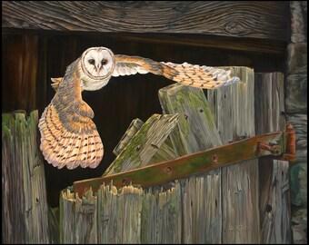 "Evening Hunt 15"" x 12"" Barn owl in flight Print"