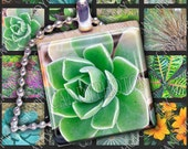 Plants and Flower Photography - 1 inch x 1 inch Square Digital Collage Sheet - Great for Scrabble Tile Pendants and Jewelry Making