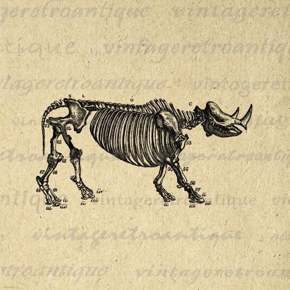 Printable Graphic Rhino Skeleton Diagram By