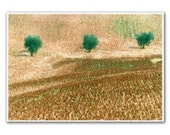 Olive Trees, 5x7'  Landscape Photography,  Fine Art, Modern Room, Nursery Art, Home decor