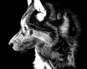 Wolf Artwork Scratchboard Print 8x10 drawing painting sketch black and white wolves original art