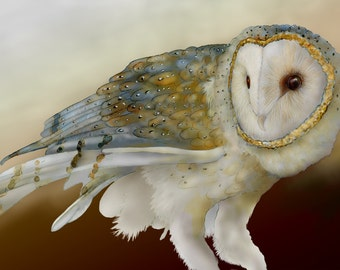 Barn Owl 12 signed fine art print 8x10, Owls, Barn owls, Bird lover gift, Bird prints