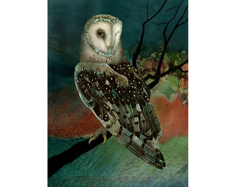 Barn Owl 2 signed fine art print 9x12 Owls Barn Owls Owl Print Bird Lover