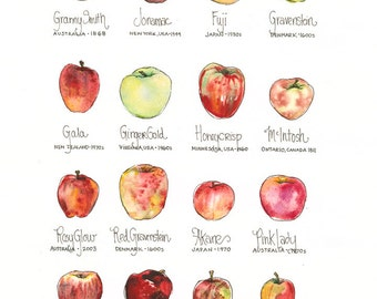 Apple Chart // ILLUSTRATION // 11x14