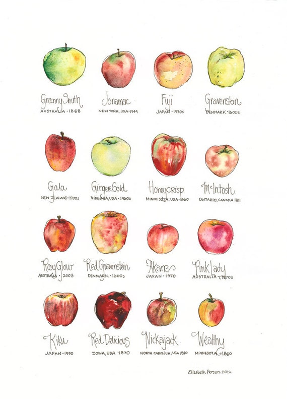 types of apples chart wwwpixsharkcom images