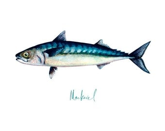 Mackerel Fish Open Edition Archival Giclee Print from original painting. 20 x 15 cm