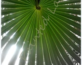 Tropical palm leaf 5x7 photo print (8x10 also available)