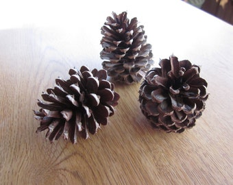 "Pinecones 40 for Crafts Wedding Decor 3"" Tall"