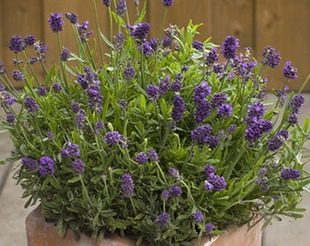 Plant Nursery - Organic