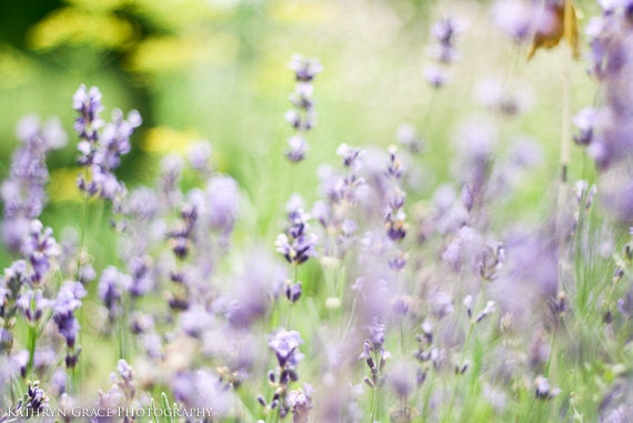 Lavender Fine Art Photography Print - Spring, Floral, Nature Photography