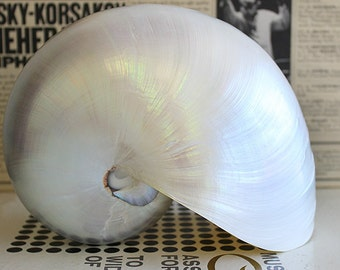 "Pearl Nautilus Seashell (6-7"") - Nautilus Pompilius"
