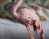 Species bird- FLAMINGO