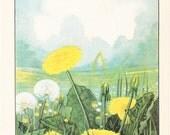 1926 Flower Print - Dandelion - Vintage Home Decor Botany Art Illustration for Nature Science Woman Great for Framing