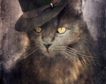 Grey Cat Art Animal Photography Gangster Kitty Pet Gifts Gray Cat Photo Pet Portrait Gifts for Veterinarians Print - Miloe Micheletti