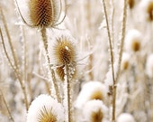 Snowy Thistle Frosty Winter Snow Floral Frost Forest 11x14 Rustic Cabin Lodge Photograph